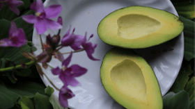 Slow Down The Aging Process With Avocados