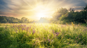 7 Radiant Reasons Why Sunlight Is Good For You