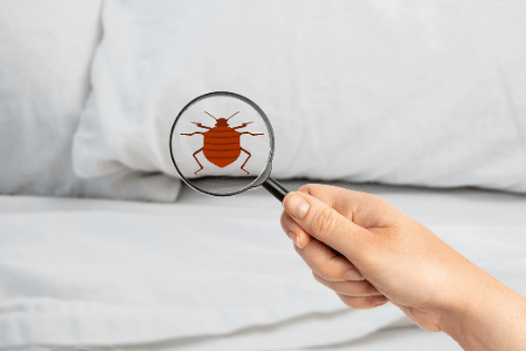 Get Rid Of BED BUGS Once And For All 1