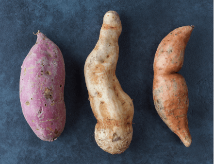There Are 3 Different Varieties Of Sweet Potatoes